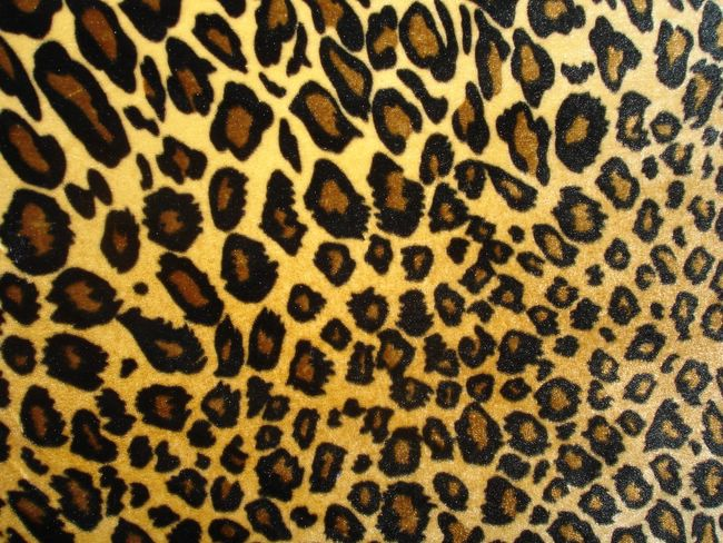 ... Prints, Leopards Prints, Animal Prints, Leopard Prints, Zebraanim: https://www.pinterest.com/swaggymaddy/animal-print